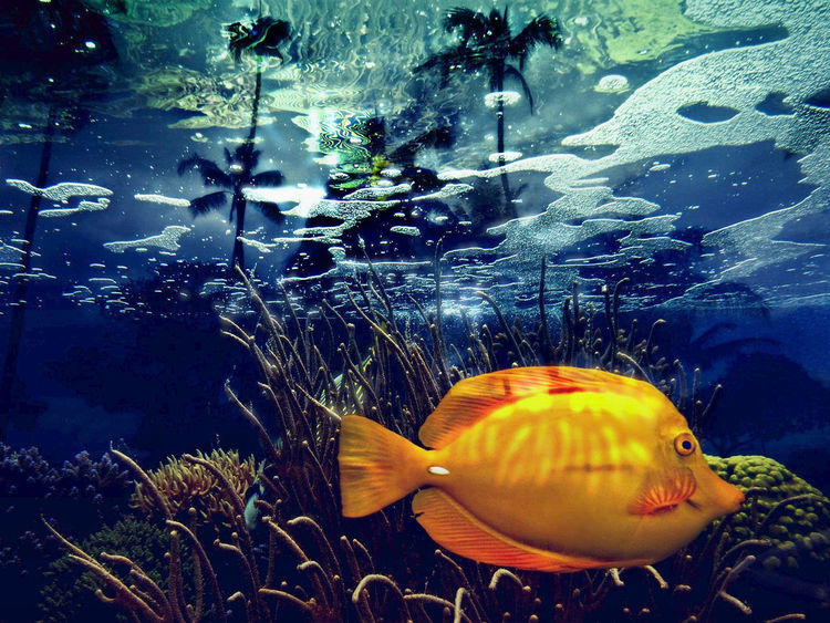 Tropical Fish Animal Themes Animal Wildlife Animals In Captivity Animals In The Wild Aquarium Beauty In Nature Close-up Day Fish Glass - Material Goldfish Indoors  Nature No People One Animal Sea Life Swimming UnderSea Underwater Water Yellow Yellow Fish