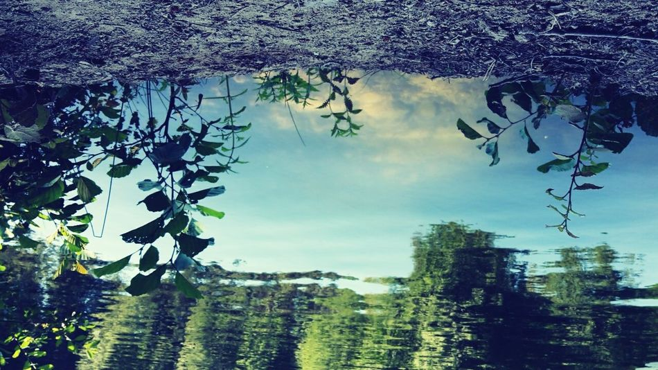 Laketime Feel The Nature Summer Water Sky Grass Blue Plants 🌱 Sky And Clouds Nature Feel The Moment Fresh On Market July 2016 Summertime Breathe Living Life Green Feel The Journey Trees Clouds Water Reflections Joy Leaves🌿 Colorful Exploring Upside Down