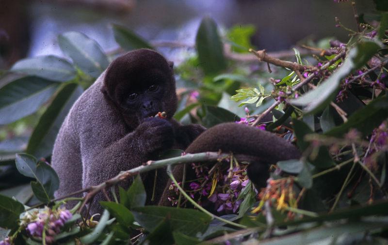 Monkey on plants