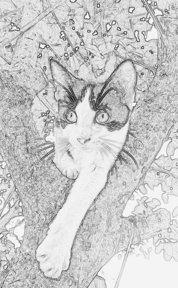 Black & White Bnw_life Bnw_collection Sketchy Sketching ☺ Cat Lovers Cat♡ Cats N Trees Catoftheday Cats 🐱 Cats Of EyeEm Cute Cats