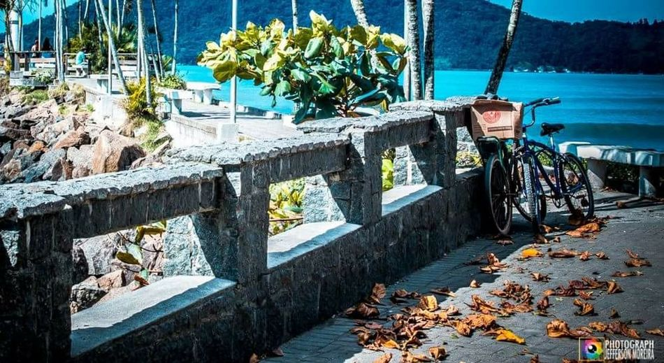 Art Praiaubatuba Bike Streetphotography Streer Art Relaxing