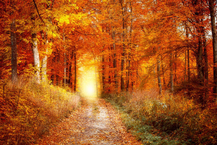 Autumn Beauty In Nature Change Day Fog Footpath Forest Grass Landscape Leaf Nature No People Orange Color Outdoors Plant Scenics Single Lane Road Sunlight The Way Forward Tranquil Scene Tranquility Tree WoodLand Yellow