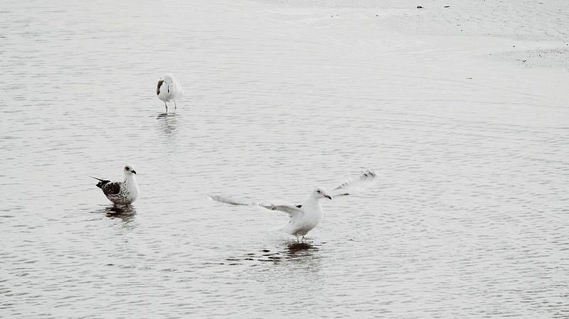 Seagulls on the beach... Monochrome _ Collection Monocrome Design Black And White Monchrome Blackandwhitephotography Blackandwhite Photography Beach Photography My Monochrome World