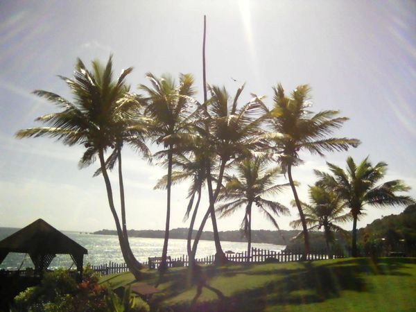 Palm Tree Water Sea Beauty In Nature Tourism Nature Sky Non-urban Scene Day Travel Destinations Scenics Vacations Sunbeam Tree Trinidad And Tobago Toco Tranquil Scene Tranquility