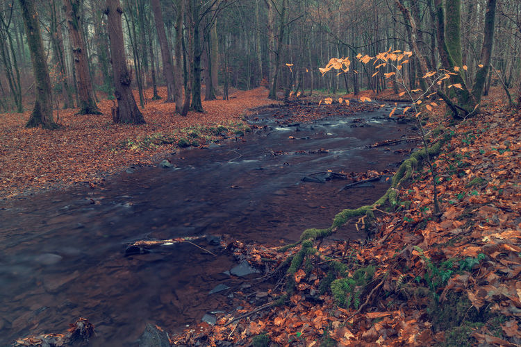 River in the forest in autumn. Art Beauty In Nature Backgrounds Forest Tree Land Plant Trunk Tree Trunk Nature WoodLand Tranquility No People Day Environment Autumn Tranquil Scene Plant Part Outdoors Landscape Leaf Non-urban Scene Change Leaves Fall