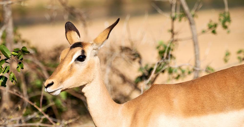 Close-up of a deer