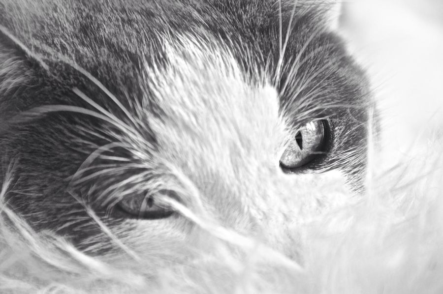 Cat Pets Close-up Blackandwhite Sweet Sleepy Livingthegoodlife