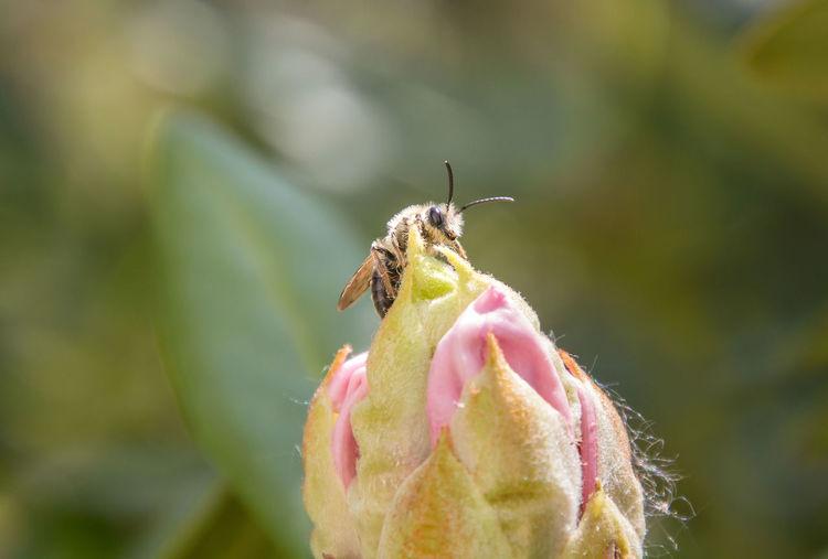 wild bee on