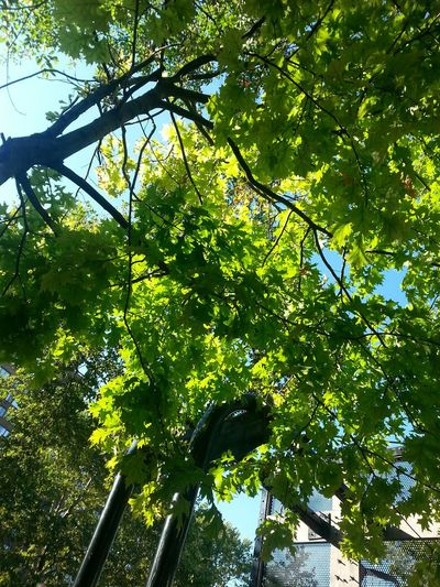 Beautiful Sky New York New York City Tree Porn Nature Sun No Filter Taken In The Summer