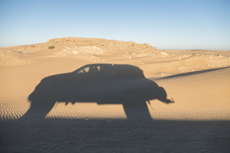 shadow of off road truck in motion in the desert Shadows & Lights Off Road 4x4 4x4 Travel Tourisme Sahara Desert Abstract Adventure Africa Sand Land Desert Landscape Sky Environment Nature Scenics - Nature Climate Arid Climate Mammal Sand Dune Tranquil Scene Day Beauty In Nature Animal No People Non-urban Scene Shadow Clear Sky Outdoors
