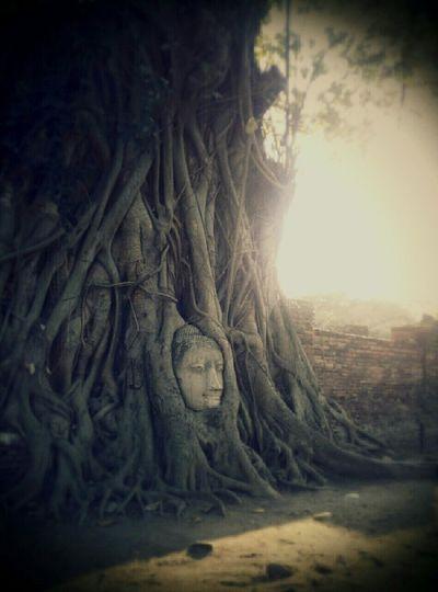 タイ ワットマハタート 世界遺産 アユタヤ遺跡 ビルマの戦い 慈悲 鳥肌