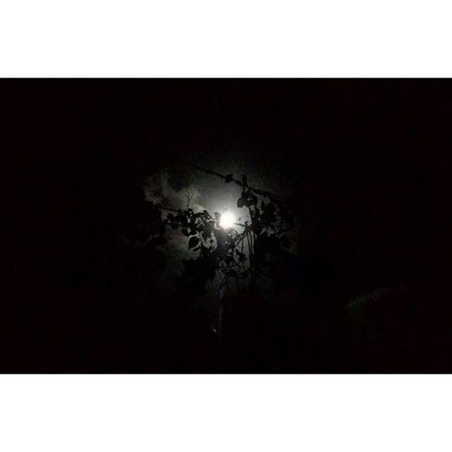 This moon light ♡ night pics **low clarity** Nightpics Moonlight Night Darkness Photolover Photographie  Zenfone Pixelmaster Lowlightphotography Instapic Picoftheday Lowclaritypic Photograhylovers