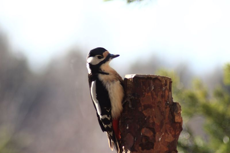 One Animal Animal Themes Bird Animals In The Wild Animal Wildlife Woodpecker Perching No People Day Outdoors Focus On Foreground Close-up Nature
