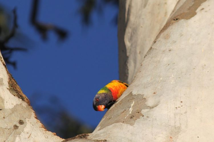 Low angle view of parrot perching on wall