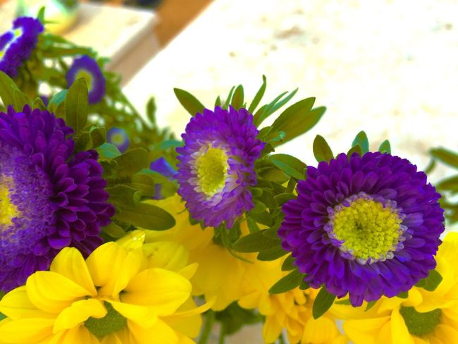 Flower Collection EyeEm Flower Purple Flower Loving Flowers