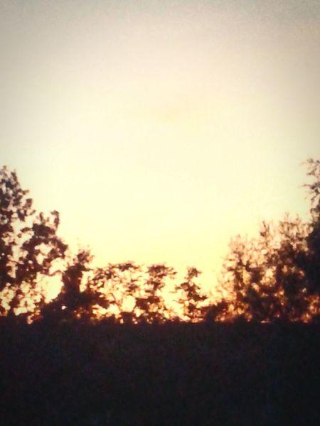 EyEmNewHere Eyem Eyem Gallery Eyem Photos Eyem4photography Sky Lovers Sunset Lovers Summer Sunset Sunsets Tramonto Trees And Sky Tranquility Tranquility Scene Tree Sunset Forest Silhouette Tree Area Backgrounds Sky Landscape Shining