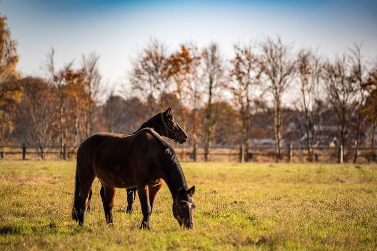 Animal Themes Domestic Animals One Animal Horse Mammal Field Grass Looking At Camera Livestock No People Nature Outdoors Day Tree 70-200mm Taking Photos Nikond750 Nikonphotography Nikon Landscape Sky