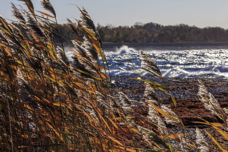 Weed in fall Autumn Nature Stormy Weather Sweden Coast Fall Fresh Ocean Orange Color Sea Waves Weed Wind Öland