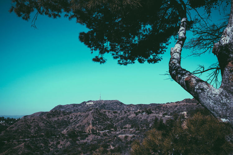 Beverly Hills California California Dreaming California Love Hollywood Hollywood Sign Los Angeles, California USA Beauty In Nature La Losangeles Mountain Nature Tranquil Scene Tranquility Tree First Eyeem Photo