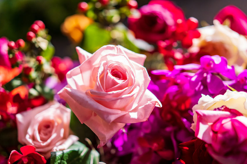 Flowers in the spring, colorful, natural, beautiful bouquet filled with many varieties of various kinds on the background of the beautiful garden full of color and scent. Flower Flowering Plant Rosé Rose - Flower Beauty In Nature Petal Freshness Plant Close-up Vulnerability  Fragility Flower Head Inflorescence Pink Color No People Nature Focus On Foreground Bouquet Selective Focus Flower Arrangement Softness