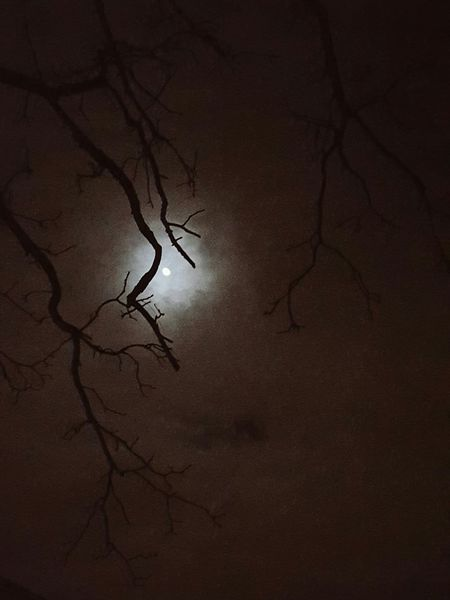 The Moon Tonight WV Sky Autumn Fall Tree Parkersburg First Eyeem Photo