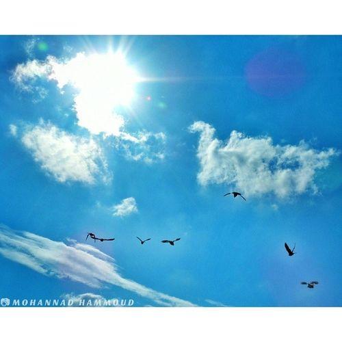 يا طيور بالعالي .. حِنّوا على حالي ! سماء حمص هنا_حمص Syria  Homs