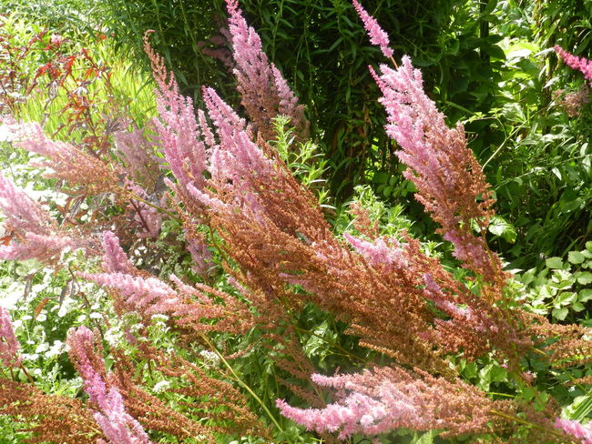 Pink Grass  Beauty In Nature Close-up Flower Fragility Freshness Growth No People Pink Color Plant