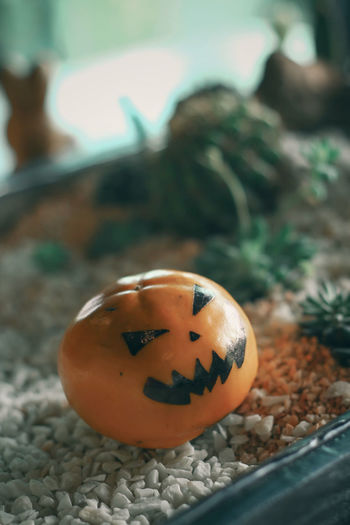 Close-up of pumpkin on stone during halloween