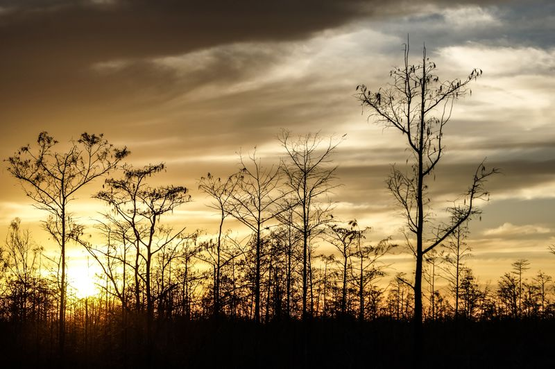 sunset in the swamps Florida Sunset Louisiana Mississippi  Silhouette South Carolina Bayou Beauty In Nature Cypress Trees  Day Florida Nature No People Outdoors Scenics Sunset Tree Vibrant Color