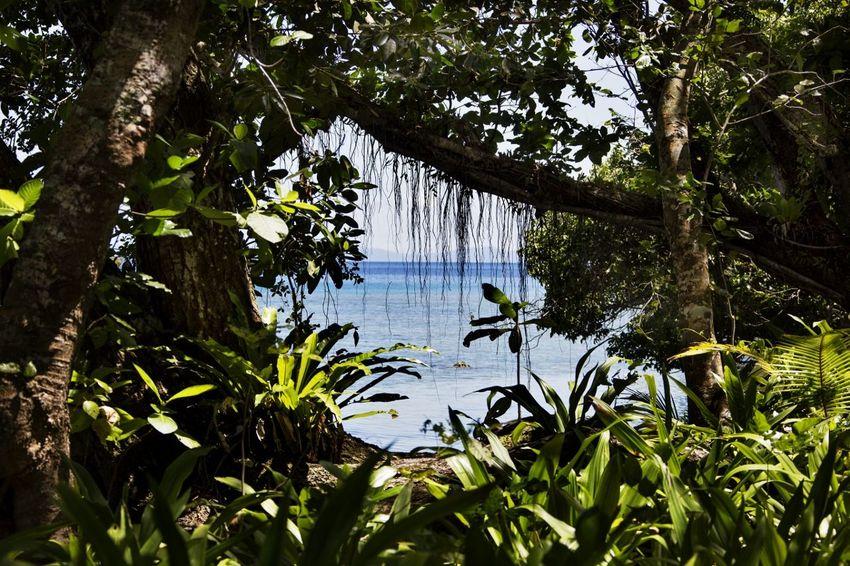 Paradise found Alotau Beach Photography EyeEmNewHere Milne Bay Papua New Guinea South Pacific Aqua Water Cuscus Possum Paradise Beach Reef View