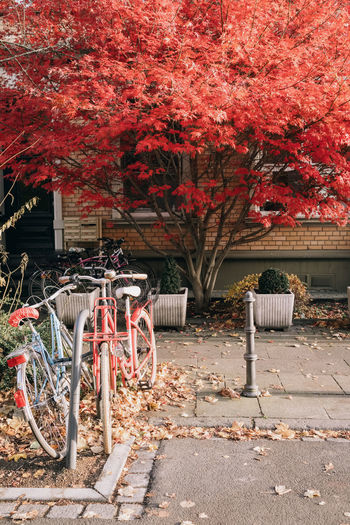 Bicycles parked by tree in park during autumn