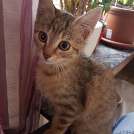 Domestic Cat Pets Domestic Animals One Animal Indoors  Kitten