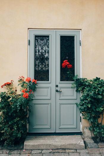 Flowering Plants By Closed Door Of House