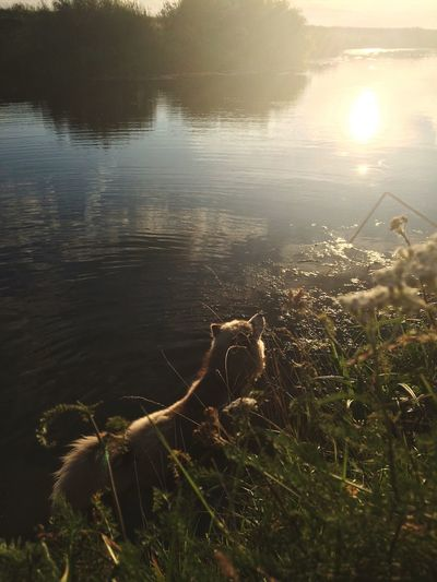 Beautiful Day Beatiful Dog Dog White Dog Water Nature Plant Beauty In Nature Sunlight Lake No People Beach Land