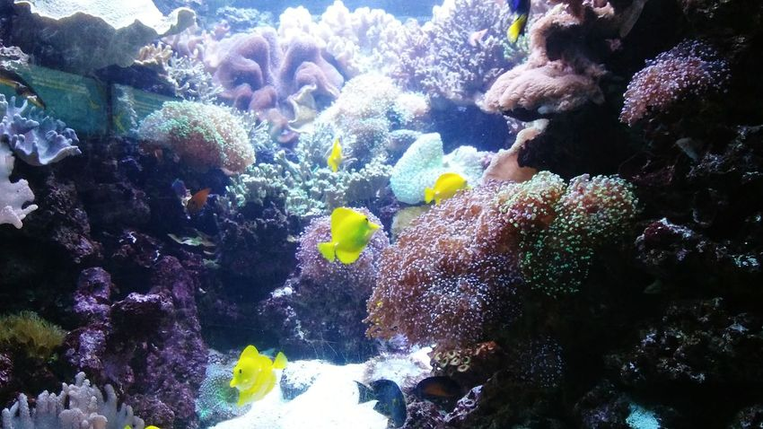 Neon Life Underwater UnderSea Coral Multi Colored Sea Life Nature Water Exotic Fish Animal Themes Close-up Beauty In Nature Outdoors Day No People Oceanscape