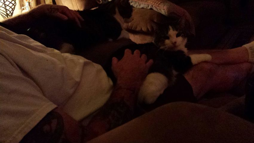 my boys tiger and boo boo kitty
