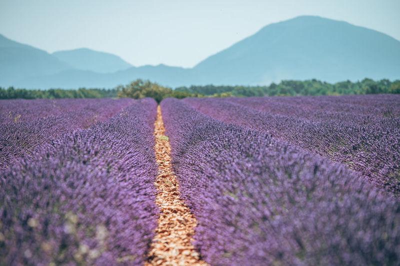 Purple flowers on field