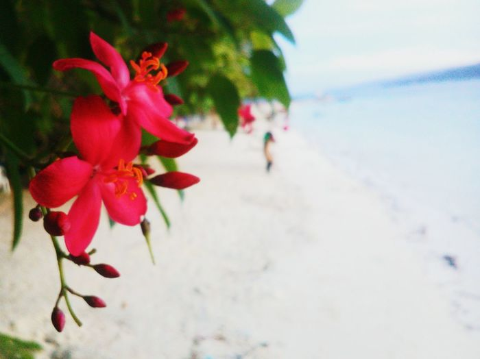 Beach Nature Beauty In Nature Freshness Sky Sea Red Beach Sea Water Nature Close-up Beauty In Nature Summer Outdoors Growth Day Sand Freshness No People Sky First Eyeem Photo