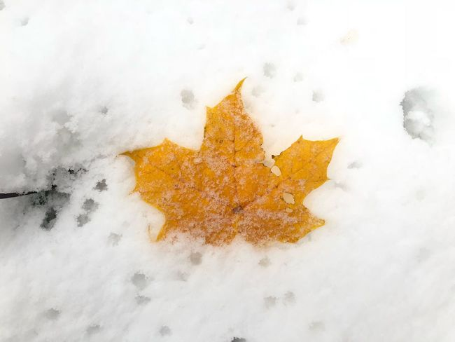 Leaf Autumn colors EyeEm Selects Snow Winter Cold Temperature White Color High Angle View Nature Frozen Star Shape
