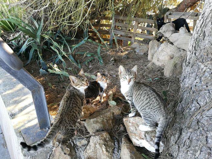 Family Cat No People Mammal Kittens Friendly Cat Gatitos Familia De Gatos Camada