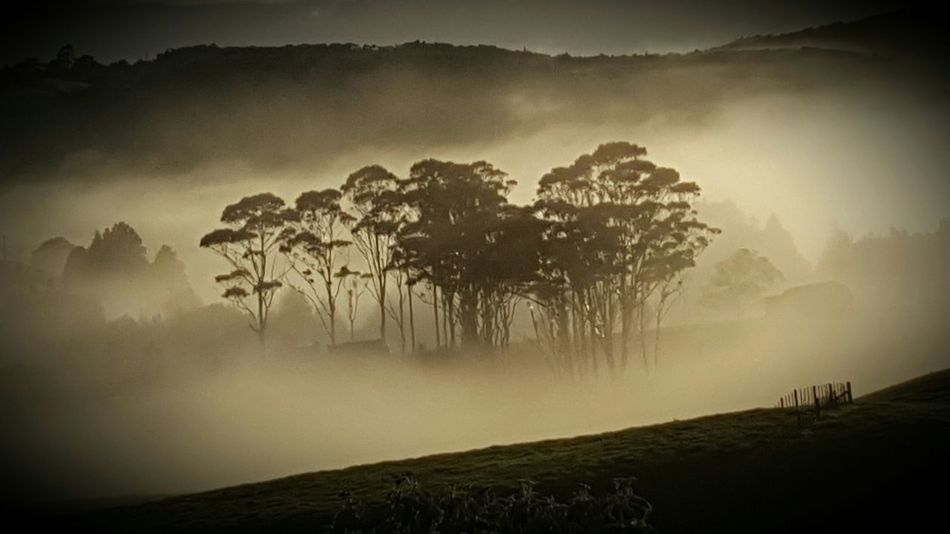 Misty morning Nz Share Your Adventure