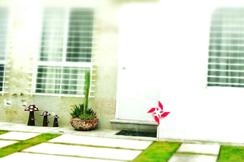 Lindo, lindo Homesweethome Querétaro Toyphotography Juguetes Juguete Del Viento Smail (:  Livelife Lifestyle Homecoming Myhome