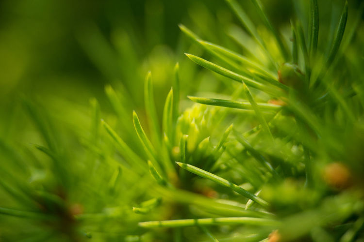 Close-up of green leaves on field