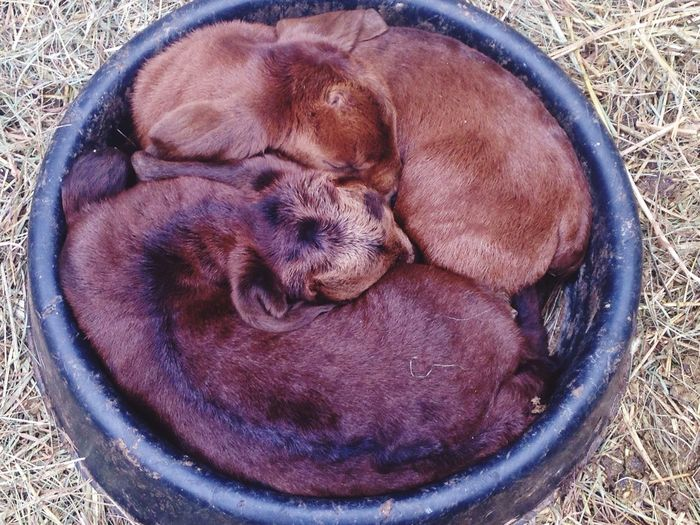 High angle view of goat kids sleeping in container