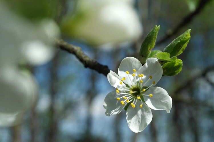 Beauty In Nature Blooming Branch Day Flower Freshness Nature No People Outdoors Petal Photography Springtime Tree