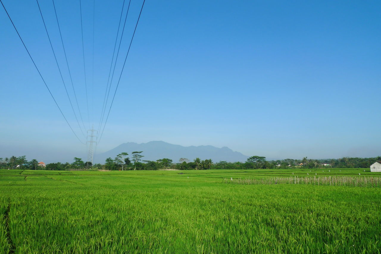 field, agriculture, landscape, nature, tranquil scene, beauty in nature, rural scene, growth, scenics, clear sky, tranquility, no people, day, cable, green color, outdoors, tree, sky