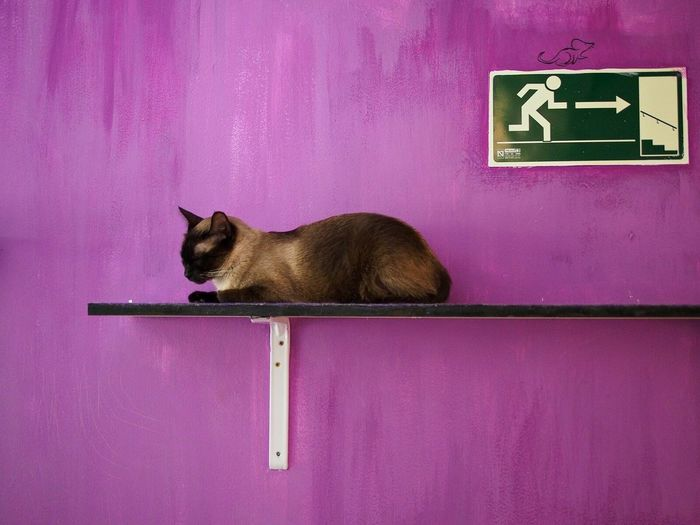 Cat Cat Cafe Gatoteca Purple