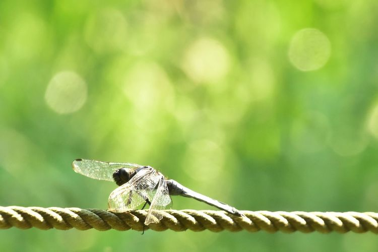 Dragonfly Bug トンボ Sunlight Sunshine Nature Beauty In Nature Nature Photography Nature_collection Naturelovers Naturelover お散歩Photo Nikon D7200 NIKKOR 18-300mm この前撮ったトンボ (o^^o) この日は日差しが強かったのでトンボも暑かったのかジッとしてた☀️😆💦