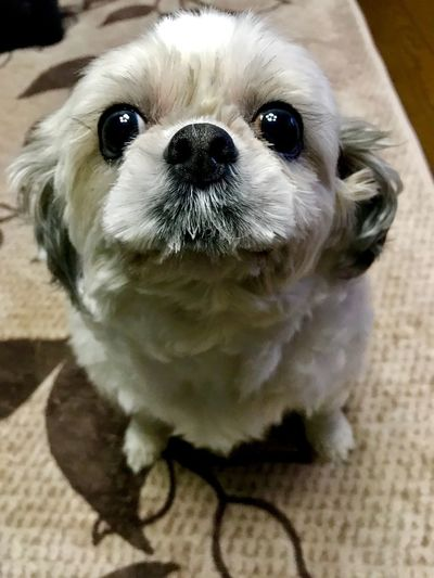 One Animal Animal Themes Dog Pets Canine Domestic Animal
