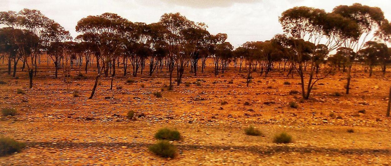 Arbre Forest Tree Desert Rural Scene Agriculture Arid Climate Sunset Irrigation Equipment Sky Landscape